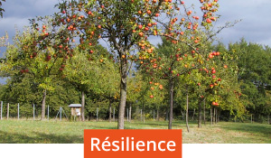 defis resilience